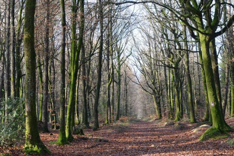 forêt de loudeac en bretagne