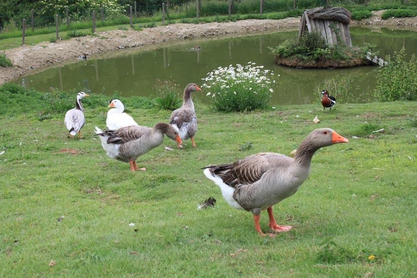 animaux (2)